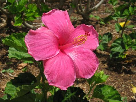 Botanical Gardens On The Island Of Oahu In Hawaii